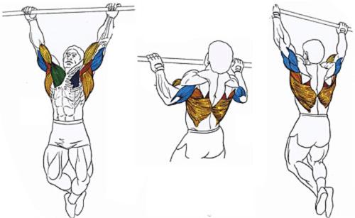 Как накачать руки в домашних условиях? Правильное питание и техника упражнений