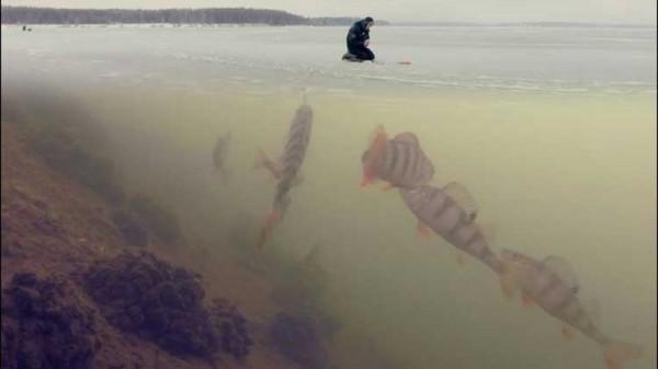 Шесть главных мифов о зимней рыбалке.