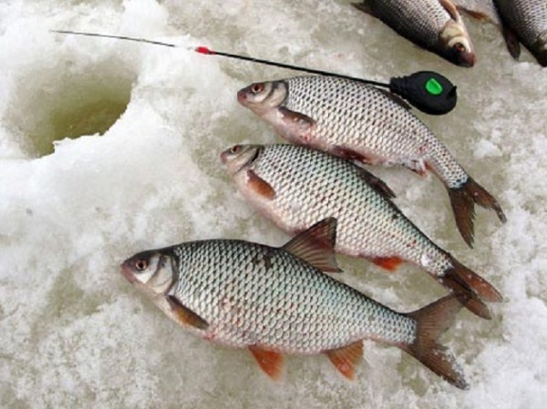Наживки для ловли зимой